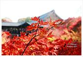 [京都] 東福寺:東福寺 (25).jpg