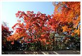 [京都] 東福寺:東福寺 (23).jpg