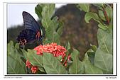 紫微環山:IMG_2784.jpg