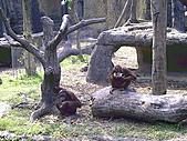 木柵動物園一日遊:DIGI1018