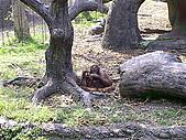 木柵動物園一日遊:DIGI1019