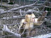 木柵動物園一日遊:DIGI1004
