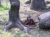 木柵動物園一日遊:DIGI1020