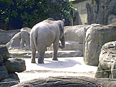 木柵動物園一日遊:DIGI1021