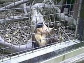 木柵動物園一日遊:DIGI1005