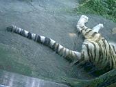木柵動物園一日遊:DIGI1022