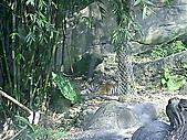 木柵動物園一日遊:DIGI1023