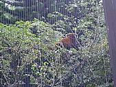木柵動物園一日遊:DIGI1055