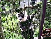 木柵動物園一日遊:DIGI1057