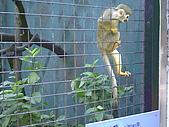 木柵動物園一日遊:DIGI1008