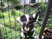 木柵動物園一日遊:DIGI1058
