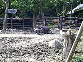 木柵動物園一日遊:DIGI1009