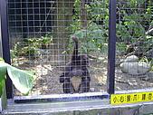 木柵動物園一日遊:DIGI1003