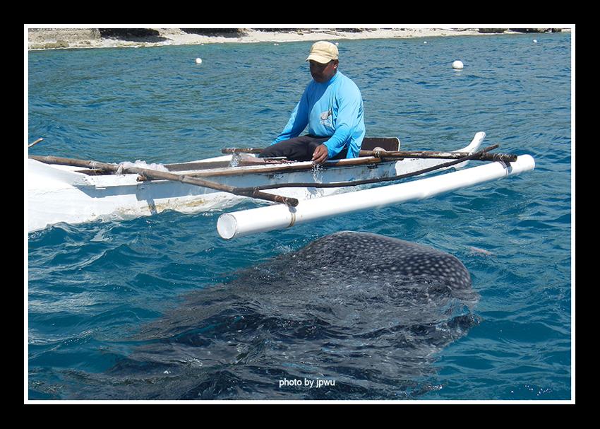 薄荷島搭船至歐斯陸賞鯨鯊:.jpg