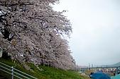 日本-仙台-櫻花:DSC_3876-9.jpg