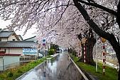 日本-仙台-櫻花:DSC_3884-17.jpg