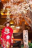 日本-仙台-櫻花:DSC_3900-25.jpg
