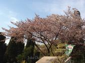全家京阪5日遊:IMG_4323.jpg