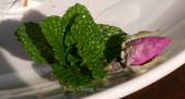 苗栗-山形玫瑰:60.jpg
