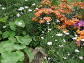 苗栗-山形玫瑰:83.jpg