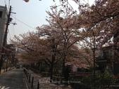 全家京阪5日遊:IMG_4331.jpg