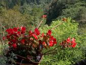 苗栗-山形玫瑰:12.jpg