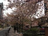 全家京阪5日遊:IMG_4332.jpg