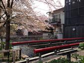 全家京阪5日遊:IMG_4335.jpg