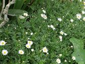 苗栗-山形玫瑰:39.jpg