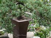 苗栗-山形玫瑰:67.jpg