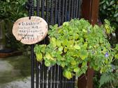 苗栗-山形玫瑰:73.jpg