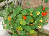 苗栗-山形玫瑰:75.jpg