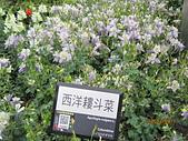 2011.3.27花博:IMG_5785.JPG