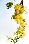 2009.05.03.阿勃勒、巴克禮公園、四草橋上:DSC_0028.JPG