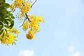 2009.05.03.阿勃勒、巴克禮公園、四草橋上:DSC_0030.JPG
