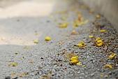 2009.05.03.阿勃勒、巴克禮公園、四草橋上:DSC_0032.JPG