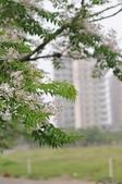 2010.03.03.東豐路、台南公園、湖美社區、安平海邊:DSC_0036.jpg