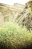 2011.01.26.安平老街、四草小碼頭芒草:DSC_0134.jpg