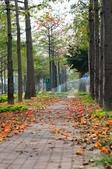 2010.03.03.東豐路、台南公園、湖美社區、安平海邊:DSC_0003.jpg