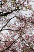 2010.03.03.東豐路、台南公園、湖美社區、安平海邊:DSC_0006.jpg