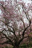 2010.03.03.東豐路、台南公園、湖美社區、安平海邊:DSC_0007.jpg