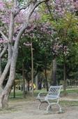 2010.03.03.東豐路、台南公園、湖美社區、安平海邊:DSC_0013.jpg