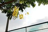 2009.05.03.阿勃勒、巴克禮公園、四草橋上:DSC_0005.JPG