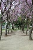 2010.03.03.東豐路、台南公園、湖美社區、安平海邊:DSC_0018.jpg