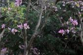 2010.03.03.東豐路、台南公園、湖美社區、安平海邊:DSC_0019.jpg
