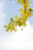 2009.05.03.阿勃勒、巴克禮公園、四草橋上:DSC_0023.JPG