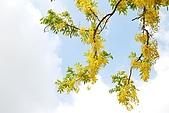 2009.05.03.阿勃勒、巴克禮公園、四草橋上:DSC_0024.JPG