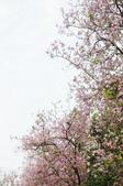 2010.03.03.東豐路、台南公園、湖美社區、安平海邊:DSC_0022.jpg