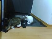 口愛的喵狗:なぜか僕の靴に興味津々