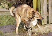 口愛的喵狗:幸福的貓